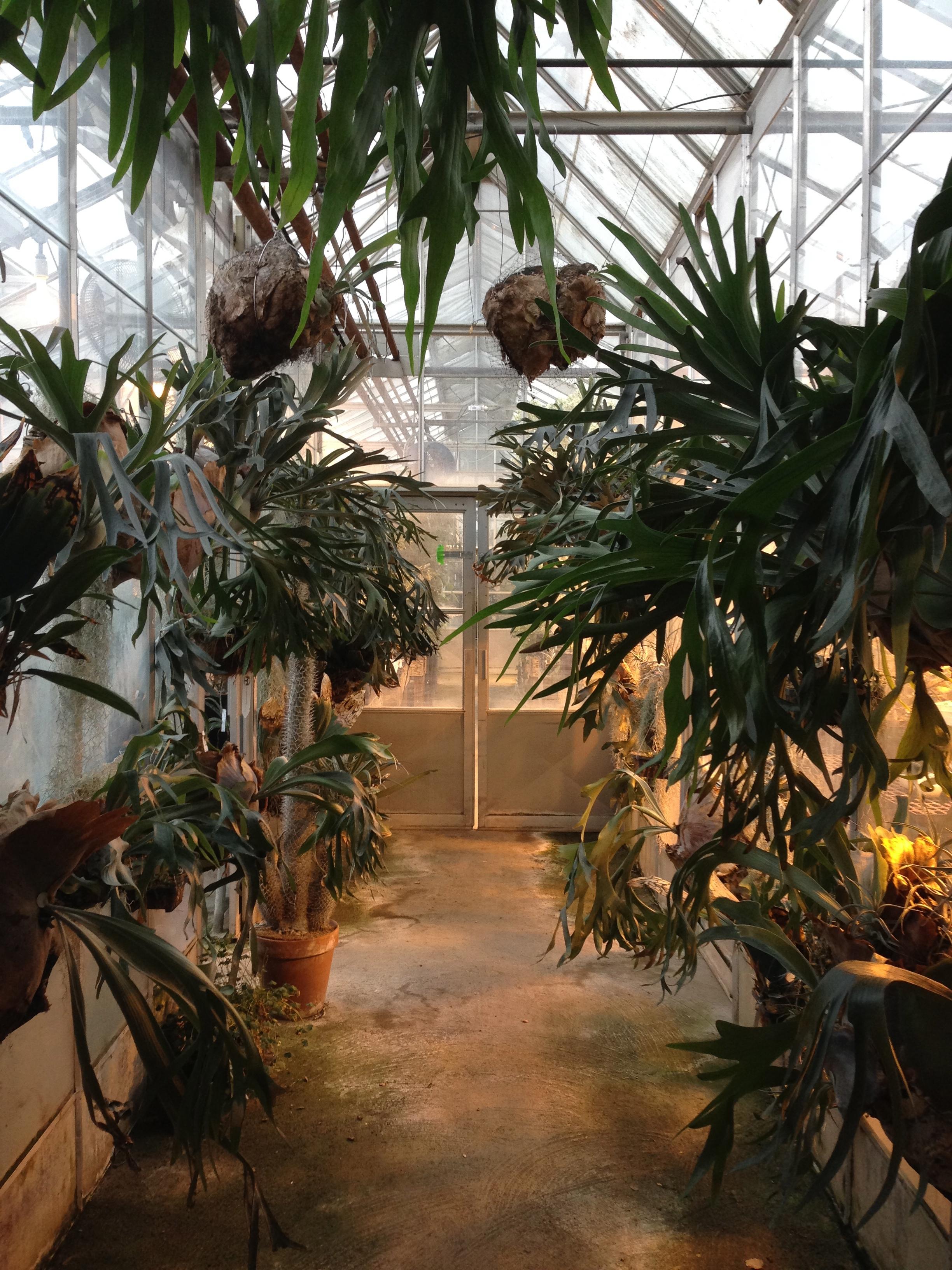 Uc Davis Botanical Garden Garden Ftempo