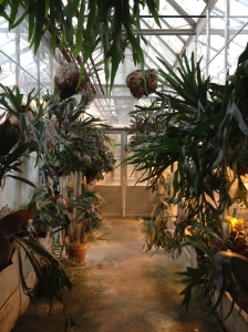 Hall O Staghorns at the UC Davis Botanical Conservatory